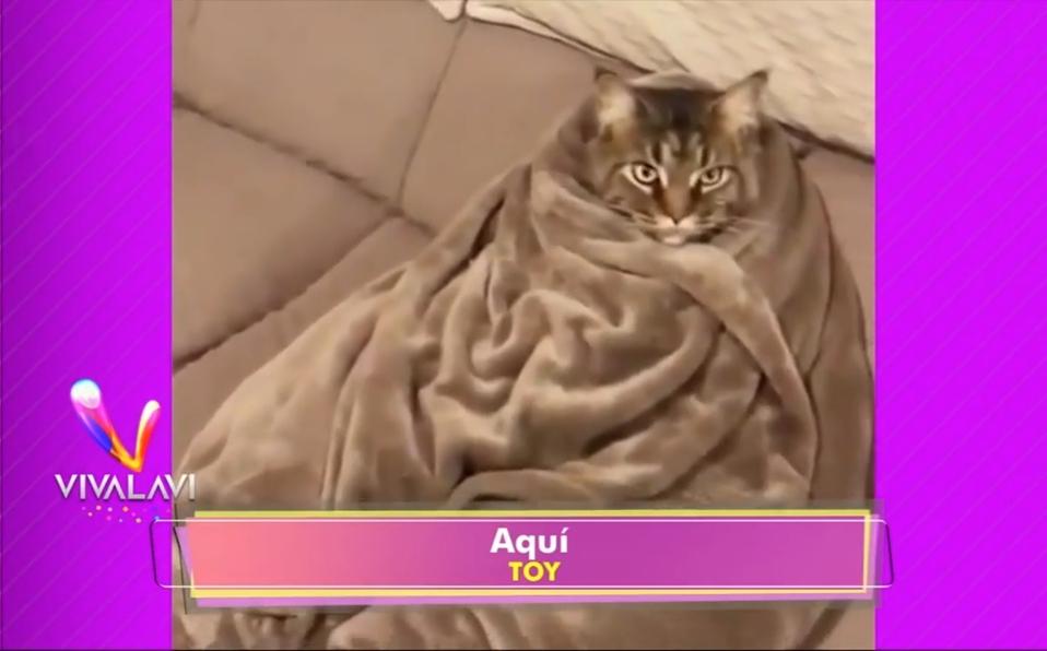 (+VIDEO) Un gato tiene actitud de 'juernes', el otro en un 'relax'