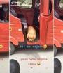 Perrito regresa solo a casa en mototaxi y video se vuelve viral. Imagen: @danielayurio9 vía Tik Tok