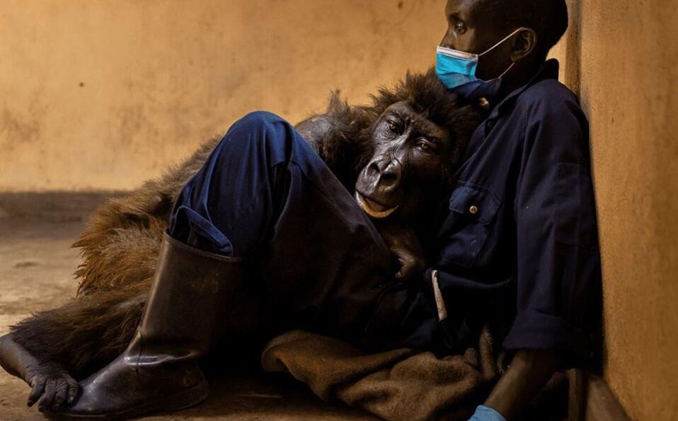Ndakasi y Andre Bauma sentados en Parque Nacional Virunga