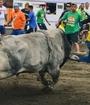 Las corridas de fin y principio de año volverán a alegrar a la comunidad costarricense. (Foto: Instagram @torotico)