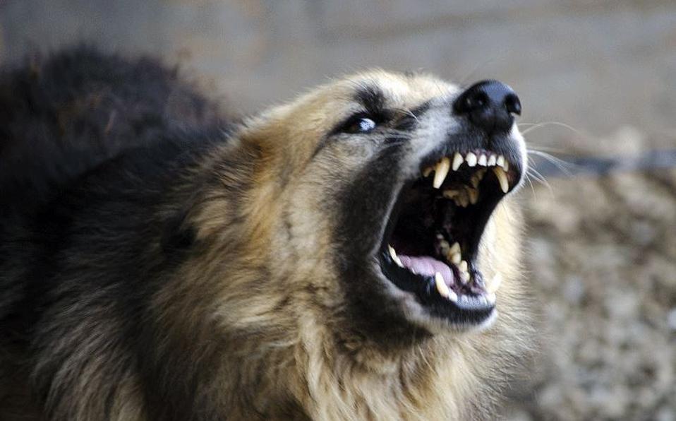 Perros atacan a dos menores edad y un adulto