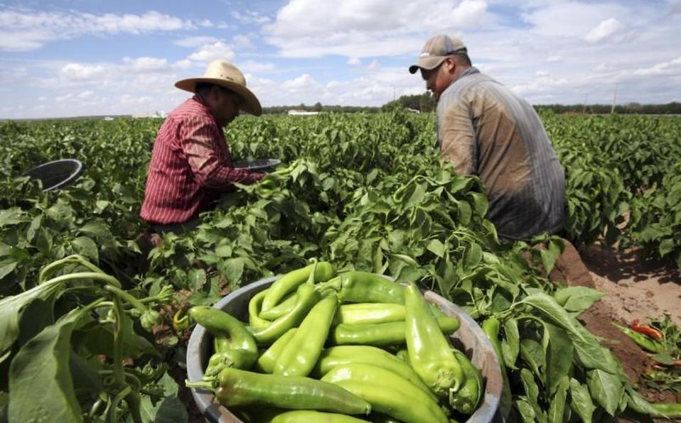 EE.UU.busca conversaciones con México porimportaciones agrícolas