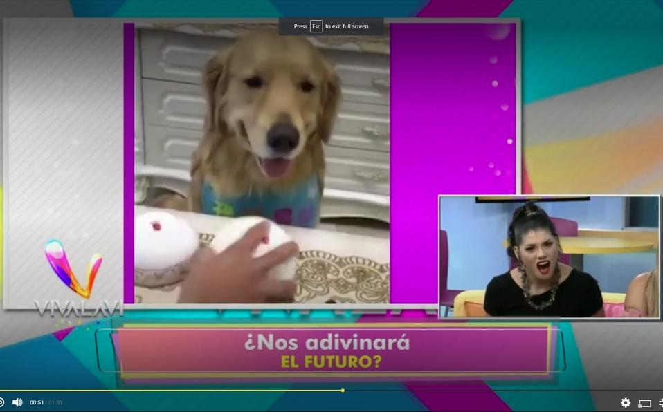 (+VIDEO) ¿El perro más inteligente?
