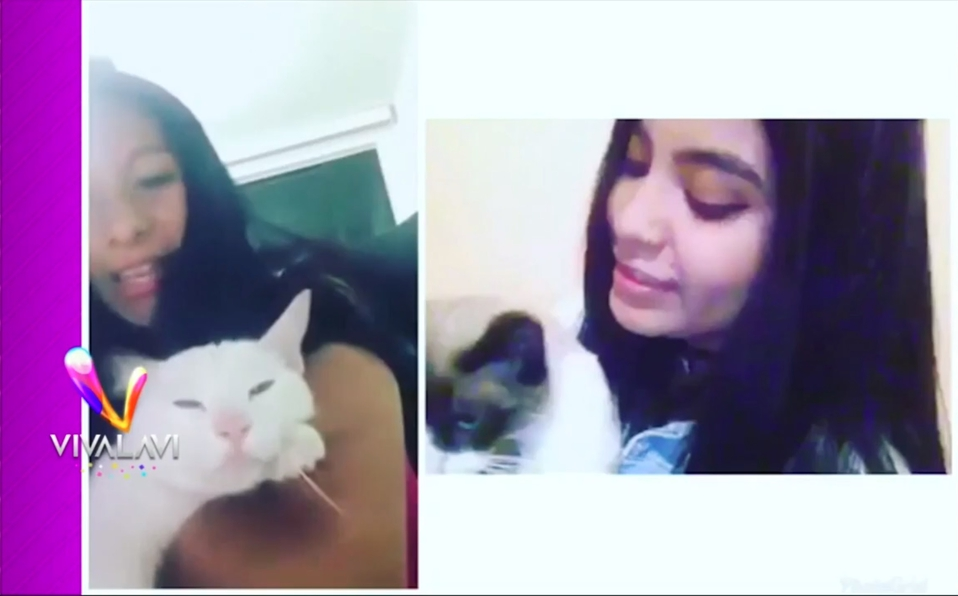 (+VIDEO) Un gato muy peleón