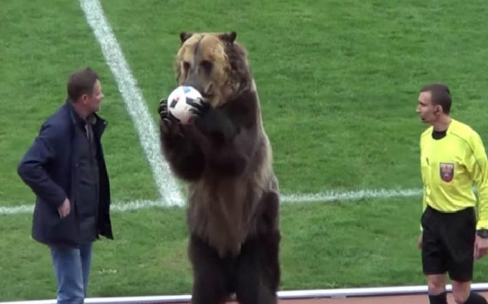 (+VIDEO) El oso que protagonizó un partido de fútbol