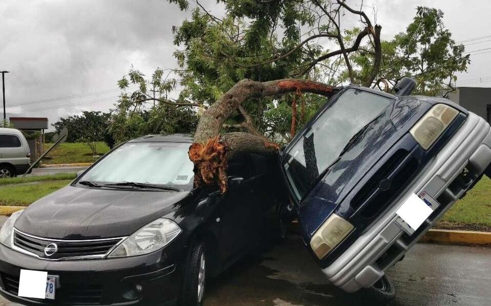 Fuertes vientos arrancan de raíz un árbol y cae sobre un vehículo en Heredia