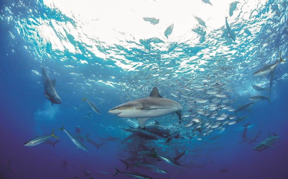 (+VIDEO) Expedición investigará especies entre Costa Rica y Ecuador